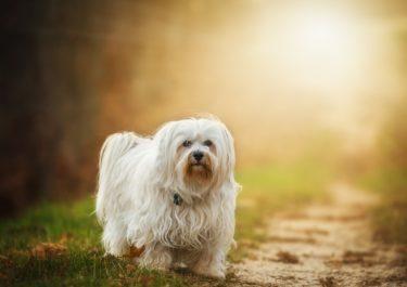 Happy Pets Life